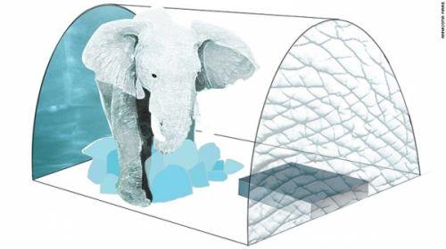 房间里的大象。每个套间,设计师设了一人形大小的非洲象冰雕。