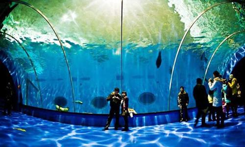 """海洋公园项目(下文简称""""长沙项目"""")位于湖南长沙大王"""