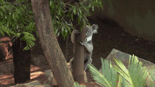 堪比原生态野生动物园
