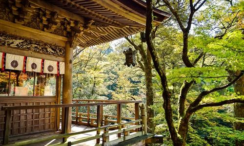 日本市场这么好 旅行社为何说