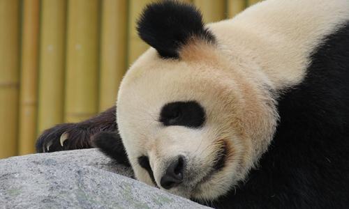 中国试点运行9个国家公园 总体方案将出台